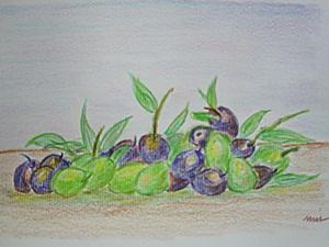 ผลมะกอก