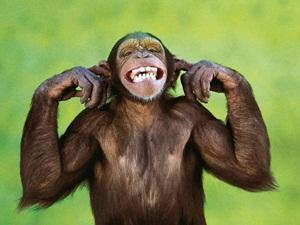 monkey mocks