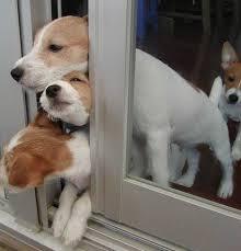 หมาขี้สงสัย