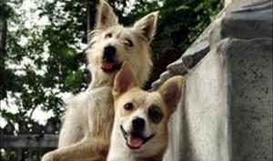 Dog secret agent