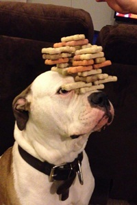 dog self-control