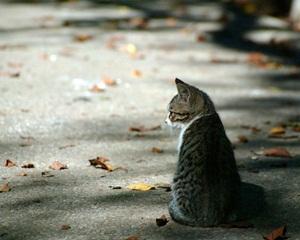 แมวคิด