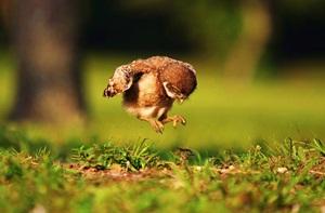 หัดกางปีก