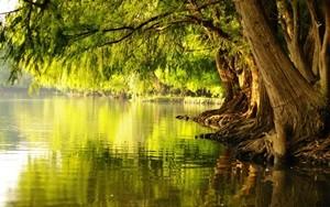 ต้นไม้ริมน้ำ