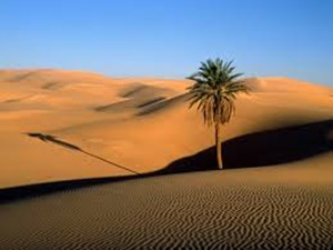 ทะเลทราย